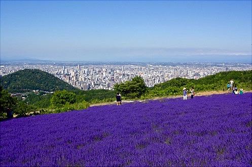 2016夏幌見峠のラベンダー