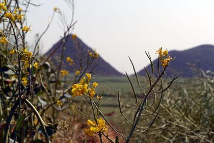 羅平(中国雲南省)