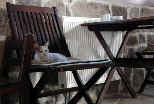 アンカラの猫