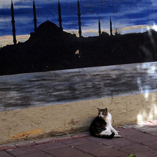 201208イスタンブールの猫1