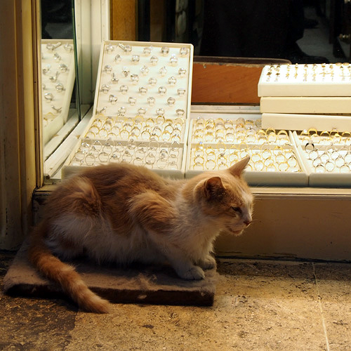201208イスタンブールの猫2