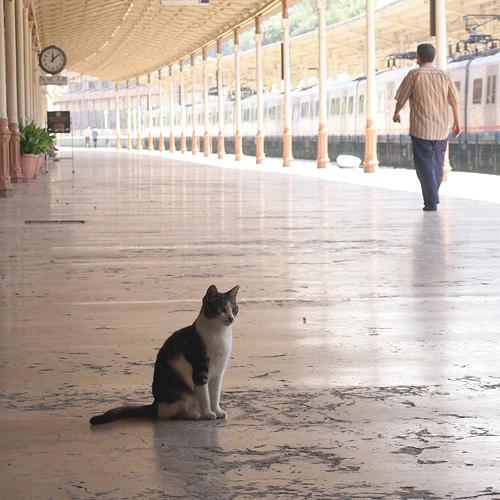 イスタンブール、シルケジ駅の猫