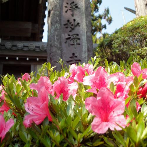 浄妙寺(鎌倉)のつつじ