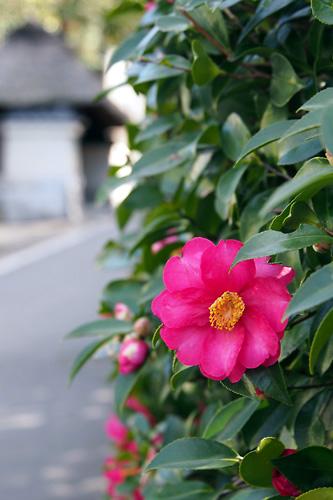 201412京都2