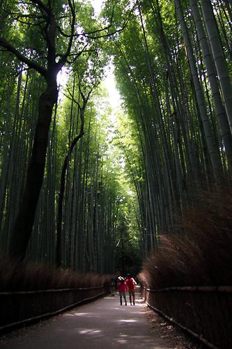 201505嵯峨野の竹林01.jpg