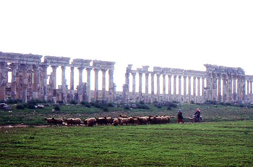 アパメア遺跡と羊群